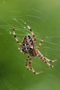 Araignées (2)