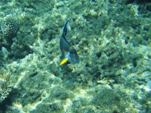 Plongée El Gouna mer rouge