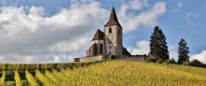 Paysage Vignoble Alsacien en automne
