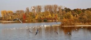 Plan eau Bischheim en automne  (1)