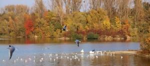 Plan eau Bischheim en automne  (2)