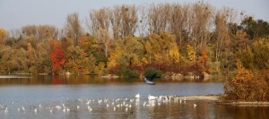 Plan eau Bischheim en automne  (3)