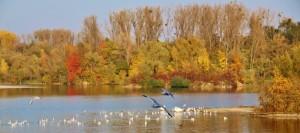 Plan eau Bischheim en automne  (4)