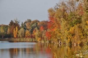 Plan eau Bischheim en automne  (5)