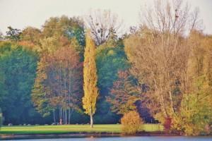 Plan eau Bischheim en automne  (6)