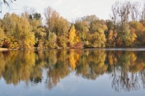 Plan eau Bischheim en automne  (7)