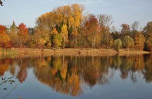 Plan eau Bischheim en automne  (8)