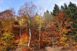 automne dans les Vosges  (4)