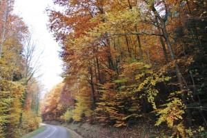 automne dans les Vosges  (6)